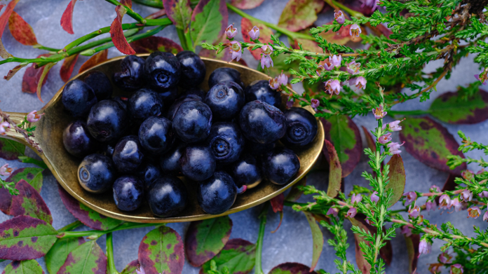 A spoonful of wild blueberries surrounded by plants and flowers.