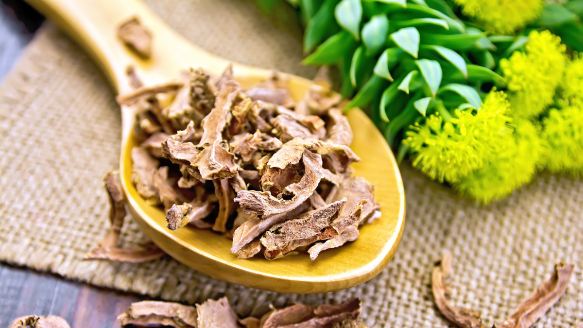 Golden root of the anti-depressant Rhodiola rosea