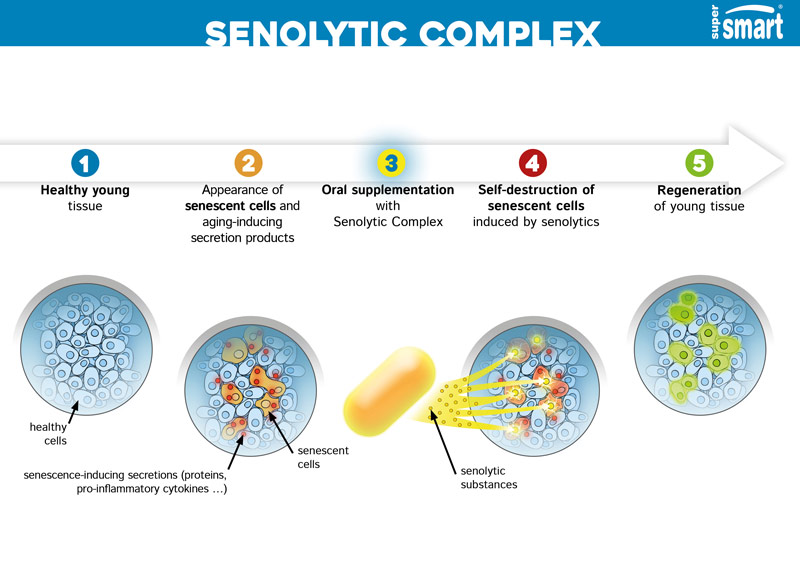 How does Senolytic Complex work?
